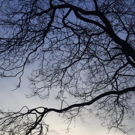liban ciel arbre