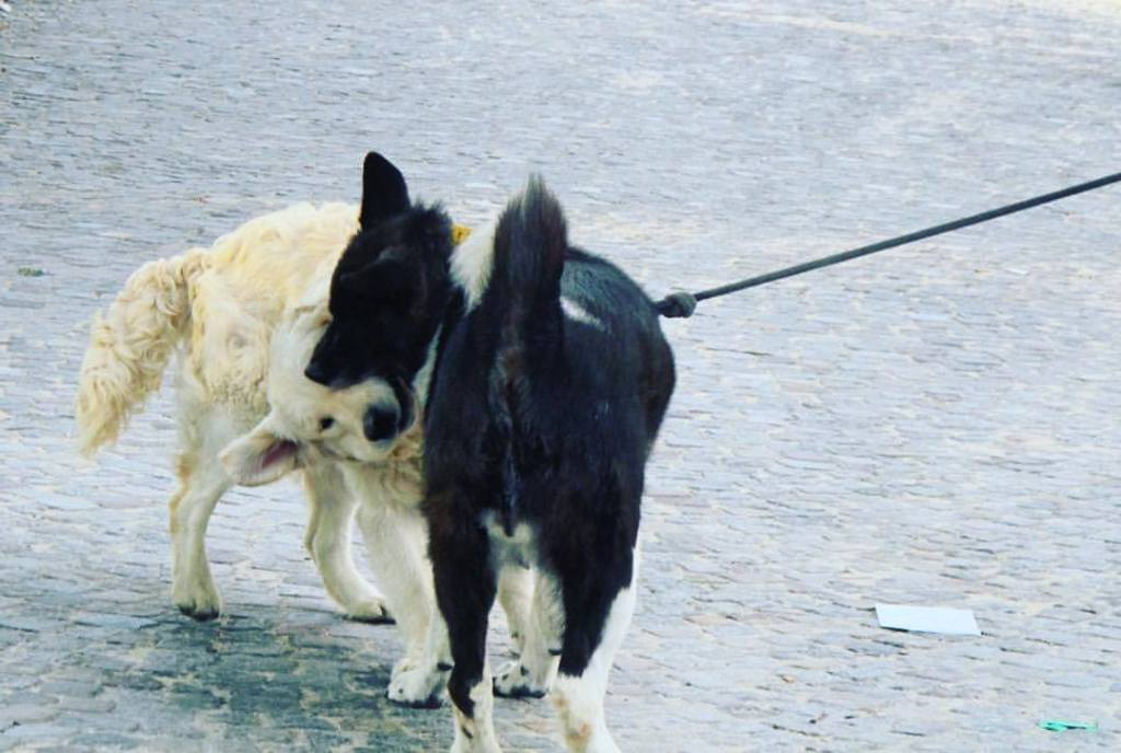street-photo chien rencontre