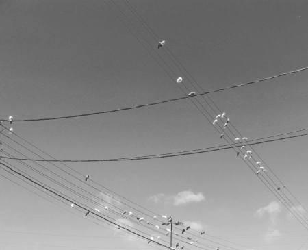 fil cablage oiseau communication
